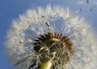 Dispersión de semilla
