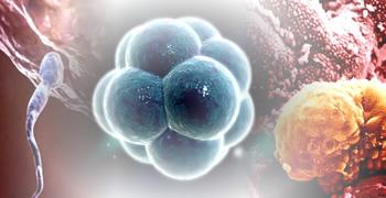 imagen representativa de actividad Fecundación. Primeras fases del desarrollo embrionario